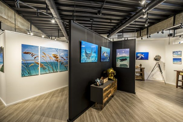 gallery explores life of sea and shore